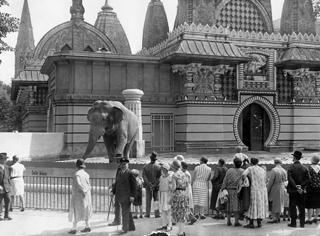 192646_Elefanten im Zoo