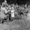 Familie im Hirschgarten