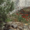 Nr. 196177_Aegina
