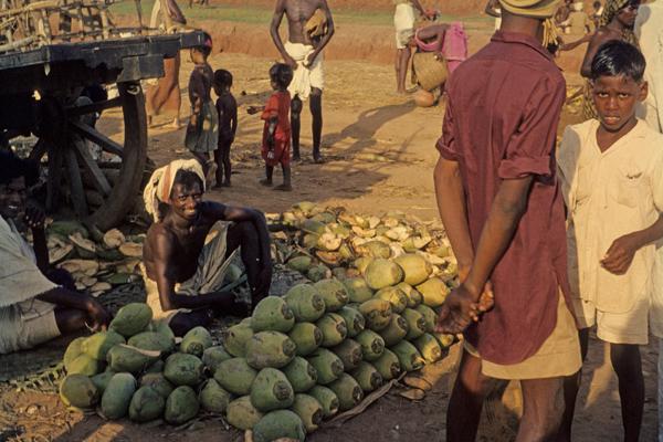 Kokosnussverkäufer in Indien, 1962