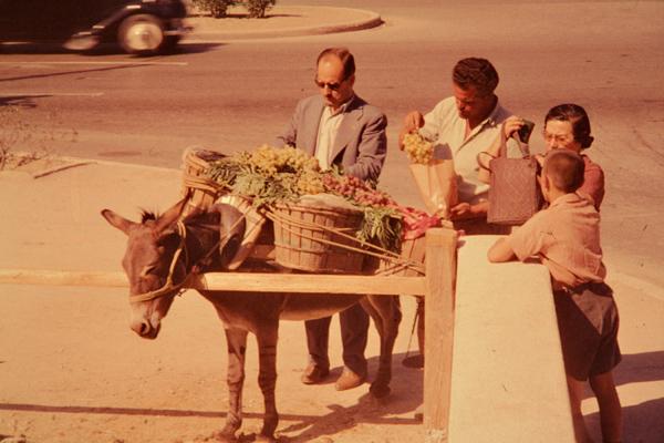 Ein Mann verkauft Obst mit einem mit Körben beladenen Esel an einer Kreuzung in Athen.