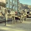 Nr. 193764 Pferdefuhrwerke