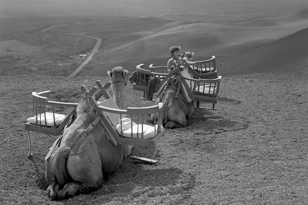 """Kamele als """"Taxis"""" und ein Junge auf Lanzarote."""