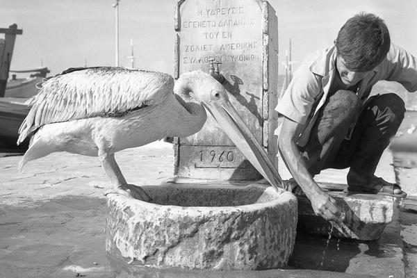 Mann und Pelikan vor einem Brunnen auf der Insel Mykonos.