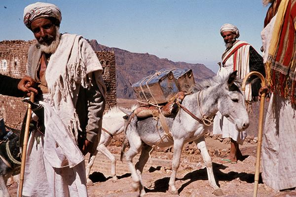 Alte jemenitische M‰nner stehen um eine Gruppe von mit Beh‰ltern beladenen Eseln im Ort Shihara.