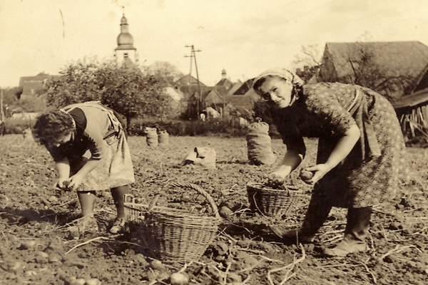 Frauen ernten Kartoffeln in Remlingen (Unterfranken) Ende der 40er Jahre.