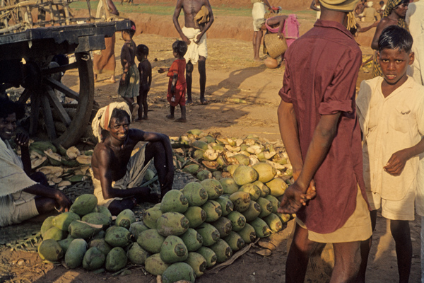 Ein Straßenhändler verkauft auf einem Markt in der Nähe von Neyveli Kokosnüsse