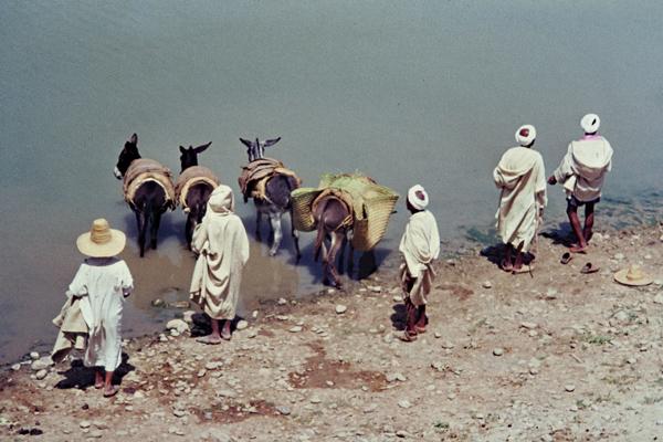 Männer lassen ihre Esel am Ufer des Sebou Flusses in Souk es Sebt trinken.
