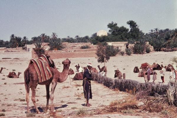 Ein Mann steht vor einem seiner rastenden Kamele in der Wüste unmittelbar vor Tozeur.