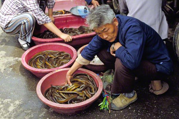 Auf dem Markt von Shanghai werden Schlangen zum Kauf angeboten