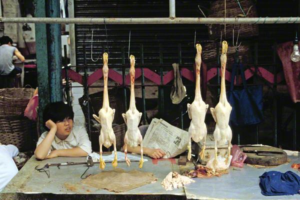 Auf dem Markt in Kanton in der Provinz Guangdong werden gerupfte Gänse an Hacken aufgehängt angeboten.