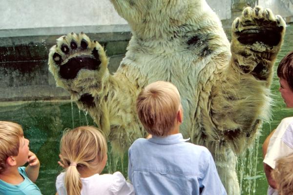 Kinder stehen vor der Eisbärenanlage im Tierpark Hellabrunn in München.