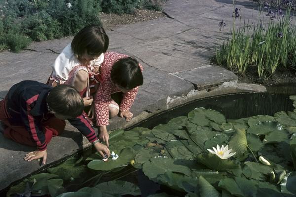 Kinder spielen am Seerosenteich des Botanischen Gartens.