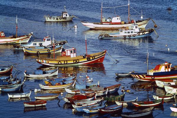 Eine Gruppe bunter Fischerboote auf dem Meer an der portugiesischen Küste.
