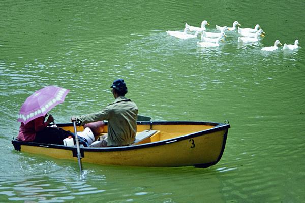 Ein Mann und eine Frau fahren mit einem Ruderboot in einem Gewässer, vermutlich einem Fluss oder See, in Kuala Lumpurpur. Die Frau hat einen rosafarbenen Sonnenschirm aufgespannt. Im Hintergrund ist eine Schule weißer Enten zu sehen.