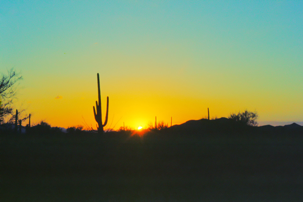 Saguaro Kakteen in der Wüste bei Sonnenuntergang, Tucson, Arizona.