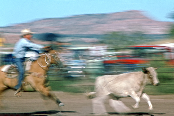 Calf Roping beim Rodeo in Grants, New Mexico, USA.